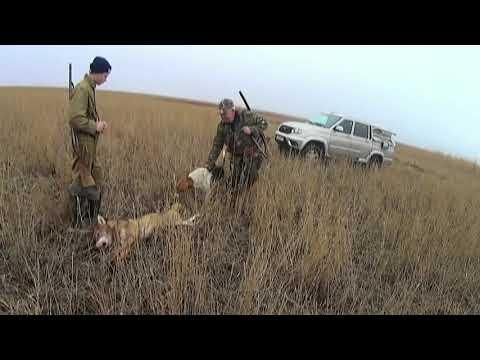 Охота с пегими русским гончими 2017г