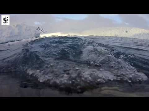 The World Wildlife Fund attached cameras to humpback whales and the footage is incredible