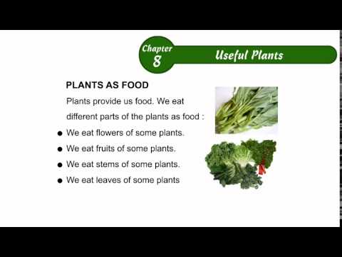Environmental Studies Class 2 Chapter 08, Useful Plants,Part02