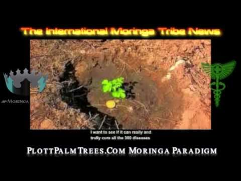 International Moringa Tribe NEWS 2013 EGYPT - PLOTTPALMTREES.COM