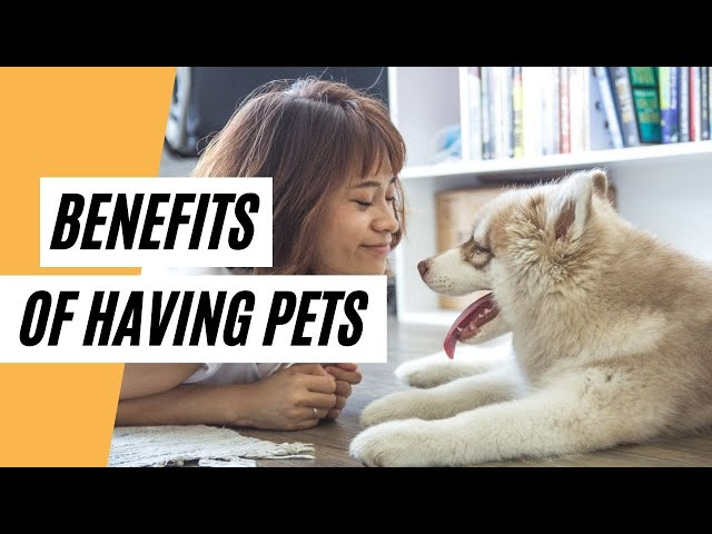 Did You Know That Having Pets Offers A Lot Of Benefits Part 2  (Healthy Benefits Of Having A Pet)