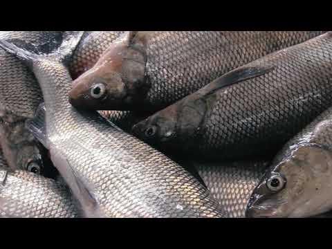Meet Your Fishermen: Two Rivers, Wisconsin