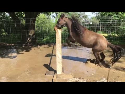 Heroes Tonight || Miniature Horses Jumping