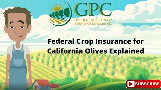 Olive Crop Insurance California Farmers| Golden Pacific Crop Insurance