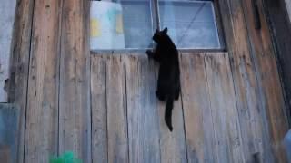 Кот лезет в окно