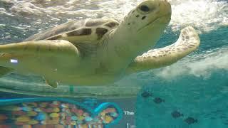 200524 여수 한화 아쿠아플라넷에서 바다거북 관찰하…