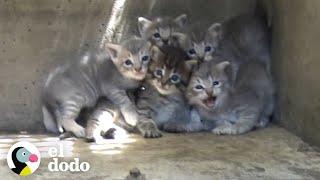 Gatitos son rescatados de una alcantarilla | El Dodo