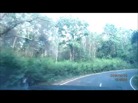 A Drive through Talamalai Reserve Forest