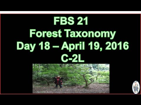 FBS 21 - Forest Taxonomy Review Materials (Day 18 | April 19, 2016) AEROSMITH - SHUT UP AND DANCE