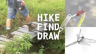 Hiking a Stream in Costa Rica &  Drawing a Dragonfly