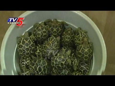 Star Tortoise Seized, Man Arrested In Anantapur | TV5 News