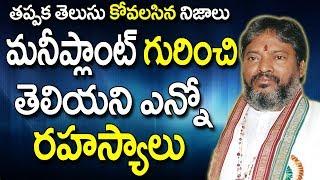మనీ ప్లాంట్ గురించి తెలియని ఎన్నోరహస్యాలు | Money Plant Uses | Money Plant Telugu | Money Plant  |