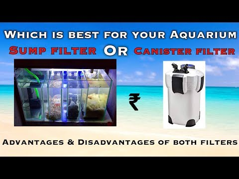 Canister or Sump filter- Which is best for your Aquarium | Tamil |