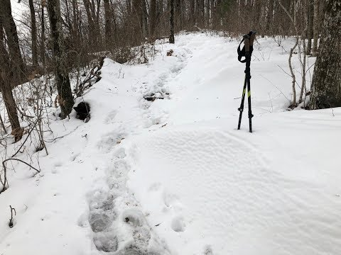 Hiking back down from Blood Mountain Shelter