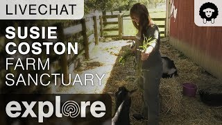 Susie Coston with Chucky and Benedict - Farm Sanctuary - Live Chat 10.05.17