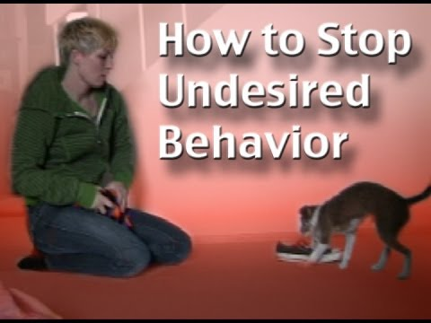 How to stop unwanted behavior-  the positive interrupter - clicker dog training