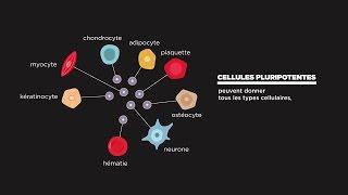 MOOC côté cours : Qu'est-ce qu'une cellule souche?