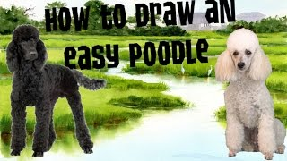 🐩🐩How to draw an easy poodle🐩🐩