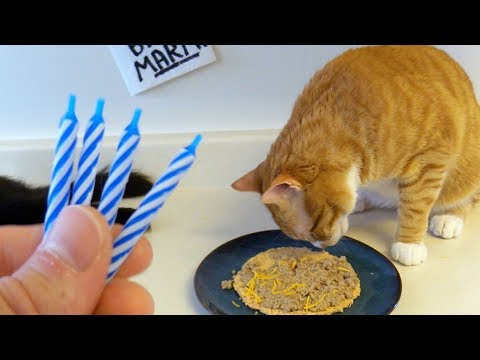 How To Make a Cat Birthday Cake/Pizza!