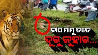 Horrific! Tiger Attacked Youth In West Bengal: Caught In Camera