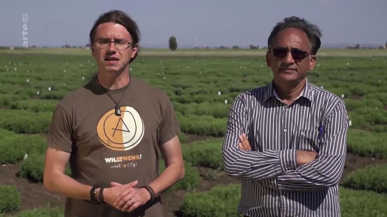 Linsen - Das Rezept gegen den Welthunger - YouTube