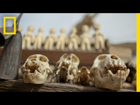 Voodoo Market Reveals Wildlife Trafficking's Grim Reality | National Geographic