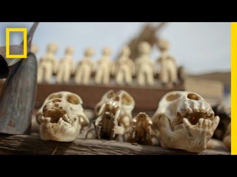 Voodoo Market Reveals Wildlife Trafficking's Grim Reality   National Geographic