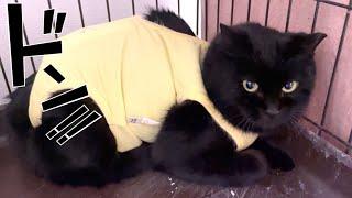 術後服似合い過ぎなレスラー黒猫再び!