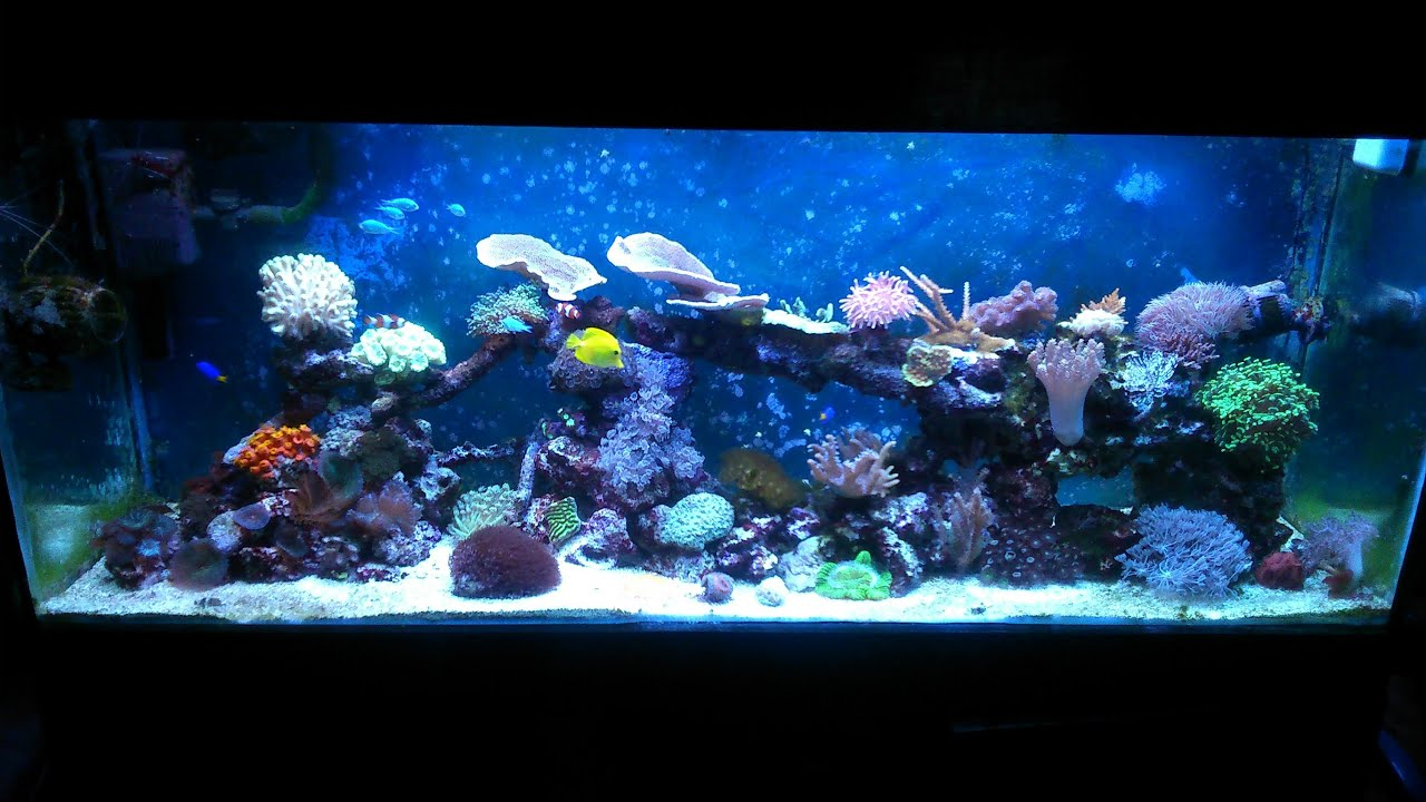 My 100g reef tank with no sump one year on in h d youtube for How to make saltwater for fish