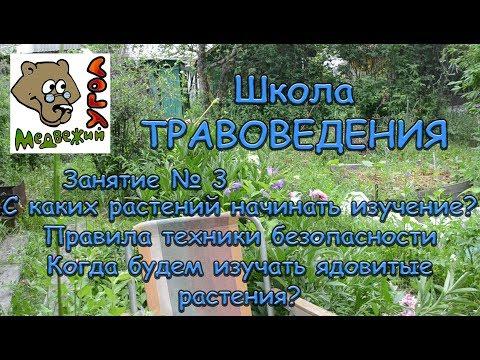Школа травоведения: Занятие № 3. С каких растений начнем изучение? + ПРАВИЛА ТЕХНИКИ БЕЗОПАСНОСТИ