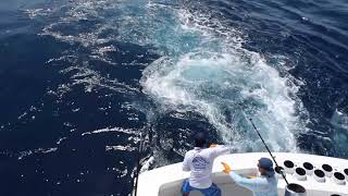 2019 Bisbee's East Cape Offshore | True Grit | Blue Marlin