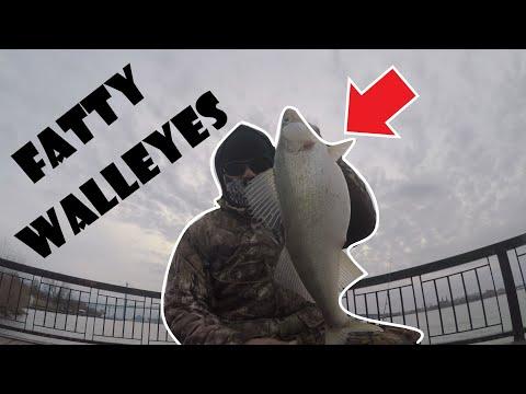 Catching SHORE FATTY WALLEYES - DETROIT RIVER FISHING