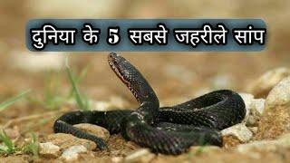 दुनिया के 5 सबसे जहरीले सांप |5 Most Dangerous Snake in the World(Fact Jigyasa)