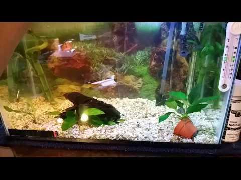 Clean Betta Fish Tank. Ph Perfect
