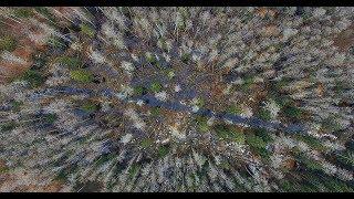 Лес в Беловежской пуще - музыкальный клип