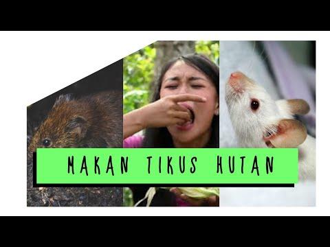 MAKAN TIKUS HUTAN - JEJAK PETUALANG EXTREME (Malola-Minahasa Selatan), Agustus 2017.