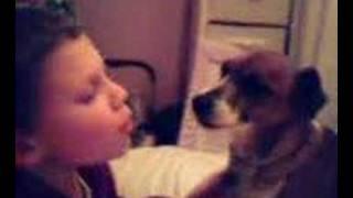 Mad licking dog