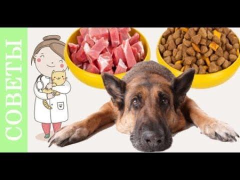 Проверь себя- правильно ли ты кормишь свою собаку. Мифы о корме собак