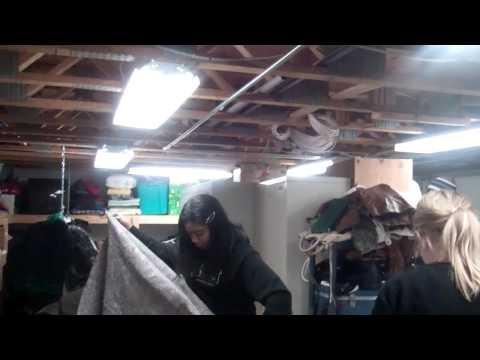 Volunteering South oakland shelter