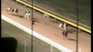 Mistress Bond, greyhound racing Ballarat