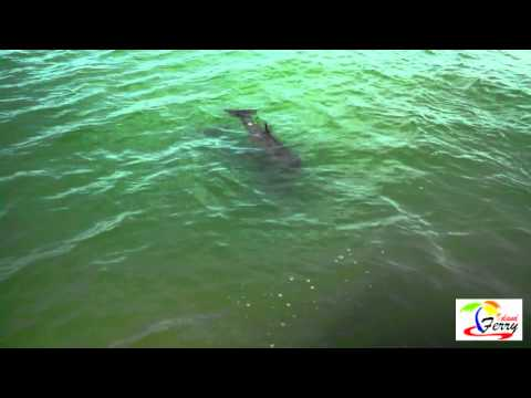 Dolphin Calf Mar2 16