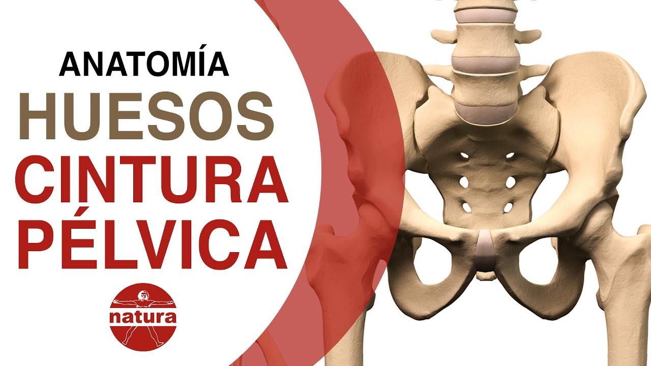 Clases de Anatomía. Pelvis, cadera, sacro. Natura - YouTube