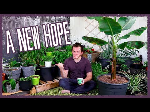 Re-Opening and GRAND Tour of the Indoor Garden!