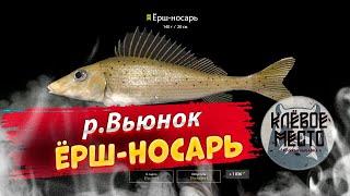Русская рыбалка 4 Фарм серебра р вьюнок ёрш носарь рр4 крупный носарь вьюнок