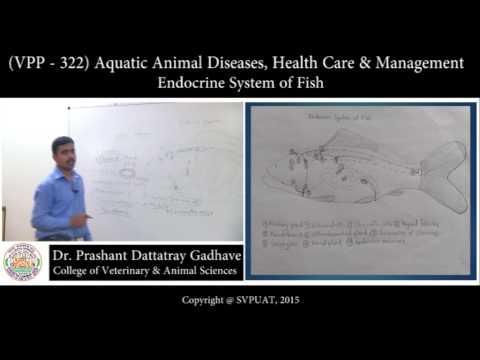 (VPP-322) Aquatic Animal Diseases, Health Care & Management _ Endocrine System Of Fish
