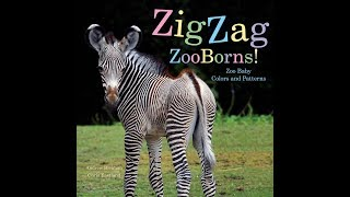 Zig Zag ZooBorns: Zoo Baby Colors and Patterns