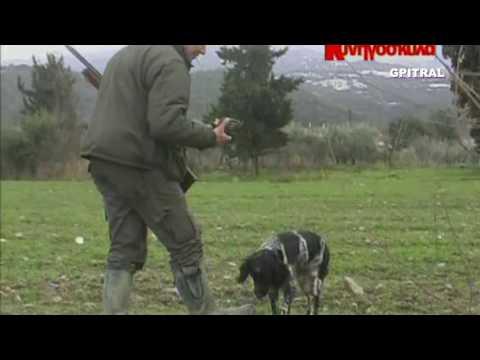 47 Τσίχλες Κοτσύφια Κυνήγι Φλεβάρη Hunting video