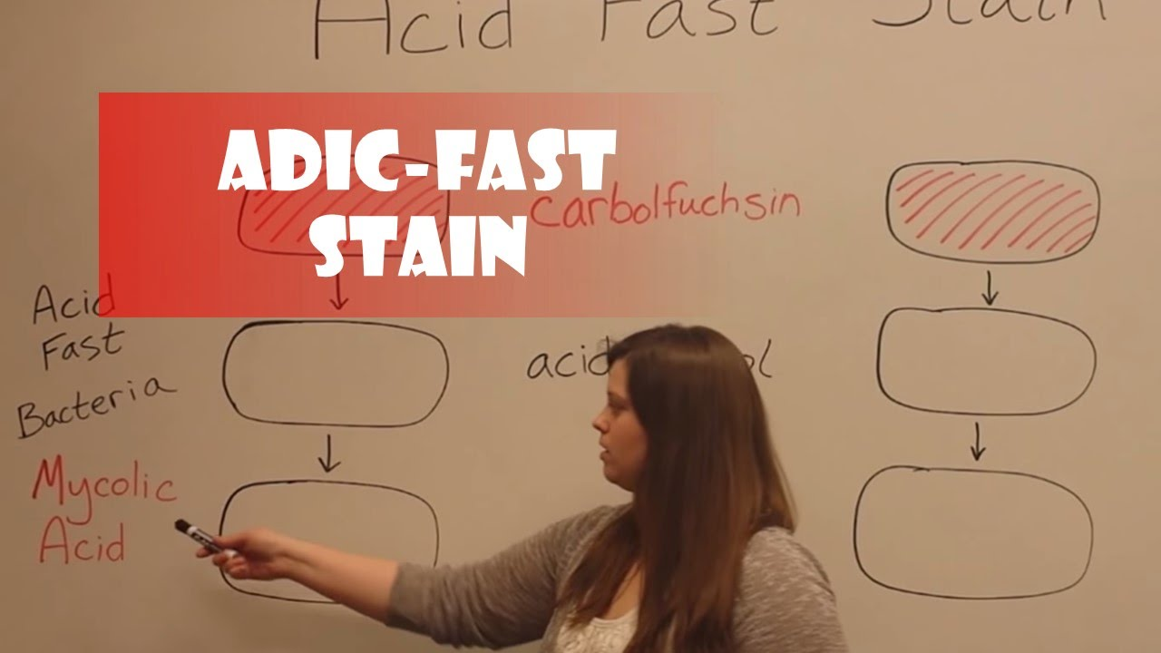 acid fast stain lab report