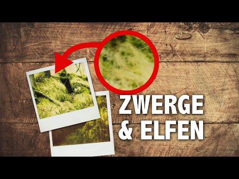 ZWERGE & ELFEN - Das sagenhafte Erlebnis des Ingomar von Lex