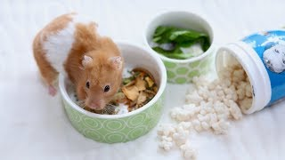 How MUCH & how OFTEN should you feed your hamster?